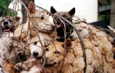 Don't let China host the 2019 World Dog Show unless it stops Yulin's dog-meat festivals!