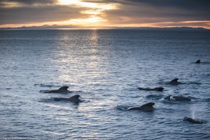 President Obama Joins Partnership Protecting Whale Migration Corridors