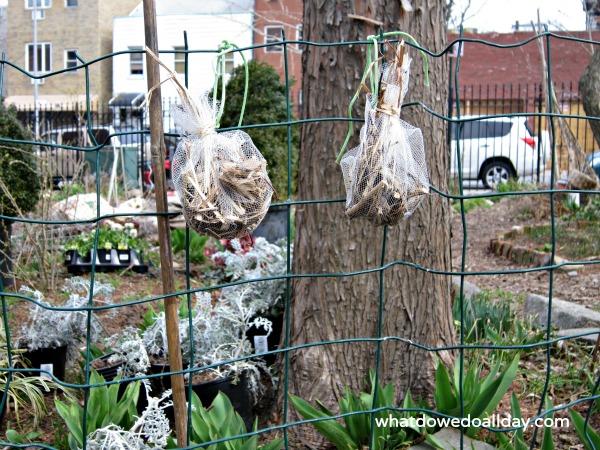 Hang bird nesting balls in yard