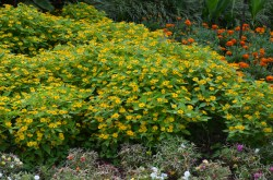 Small Of Ground Cover Seeds