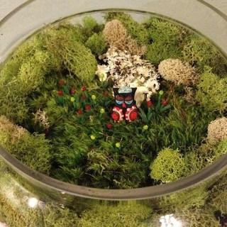 Reader Showcase – DIY Fairy Garden Terrarium