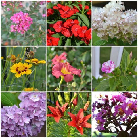 summer flowering plants, Summer Garden