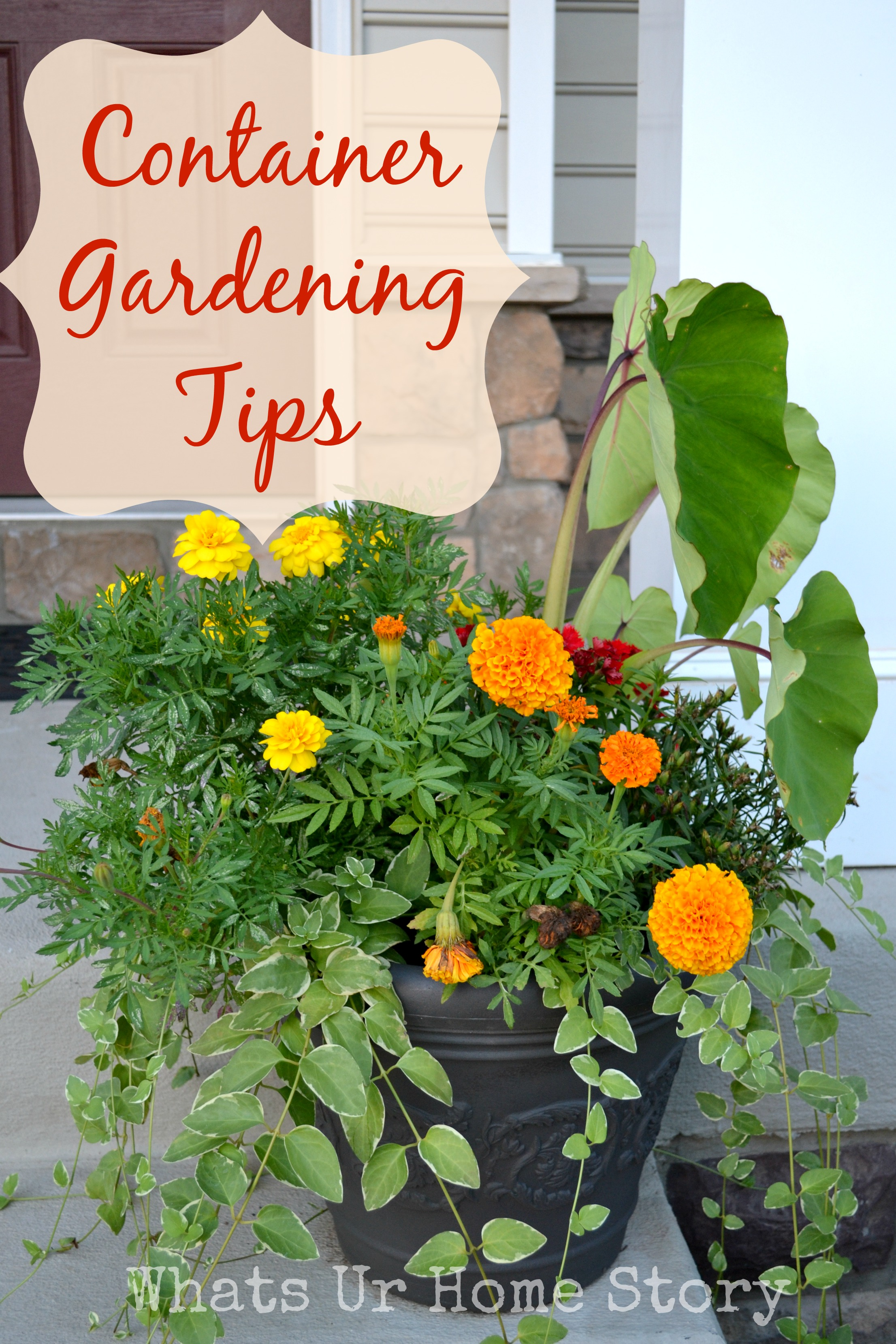 Container gardening whats ur home story - Container gardening basics ...