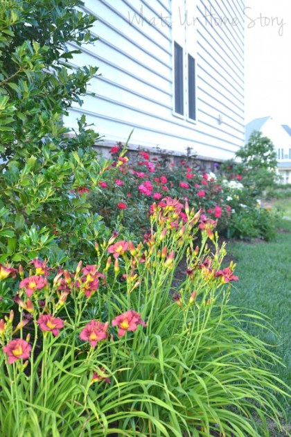Whats Ur Home Story: Dianthus, elephant ear, container gardening, marigolds in a planter