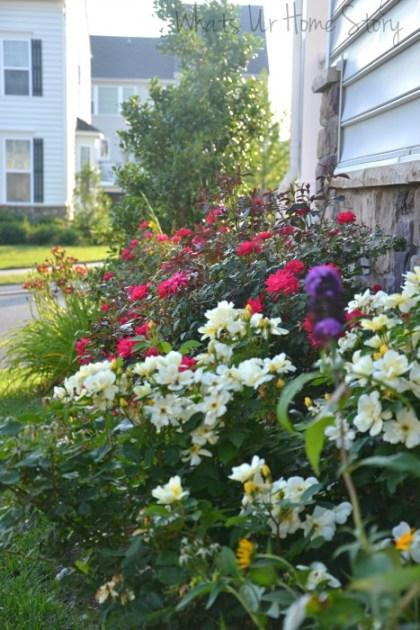 Whats Ur Home Story: side yard bed, sun loving plants.Summer Garden