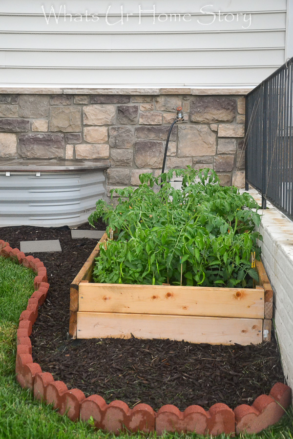 diy vegetable bed with a brick border
