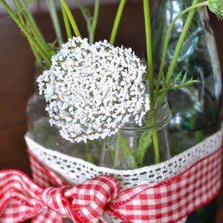 Flower Power – Queen Anne's Lace