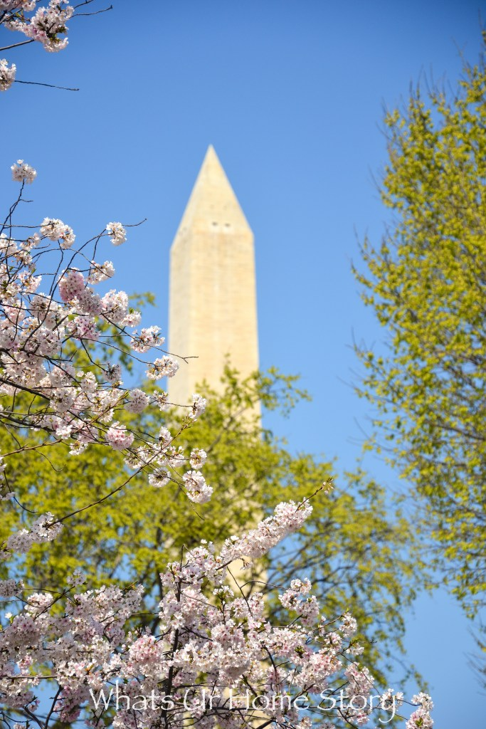Cherry Blossom Festival 2016- view of the Washington Monument through the blooms