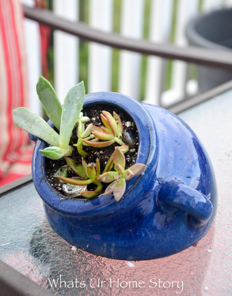 succulentsin a sideways planter