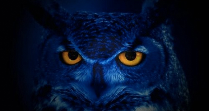 Day 7: The Night Owl