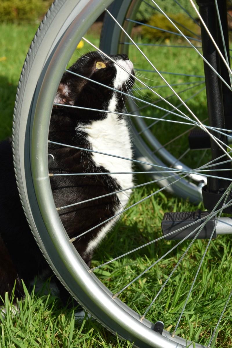 Wheelchair Services Update
