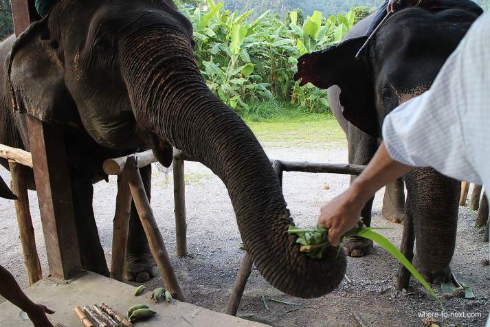 Elephant Hills, Khao Sok, Thailand