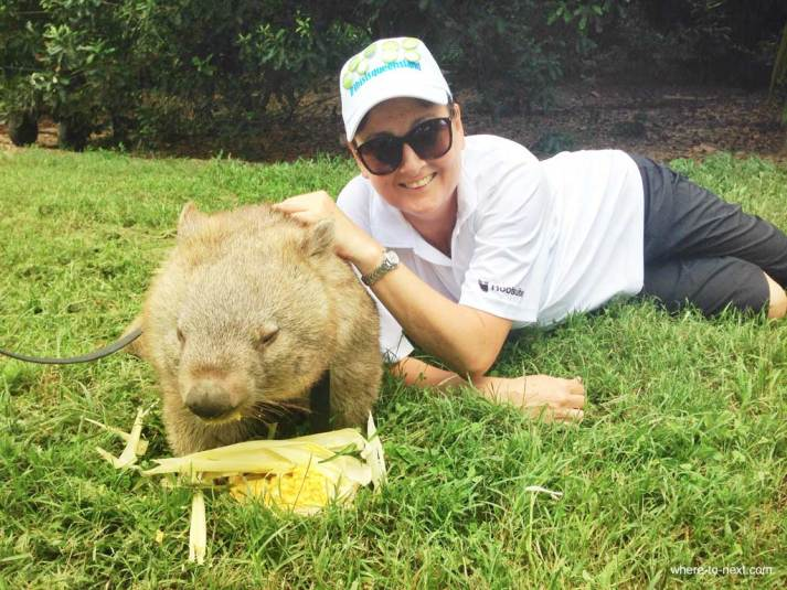 Wombat love at Australia Zoo, Sunshine Coast, Queensland #escapers15