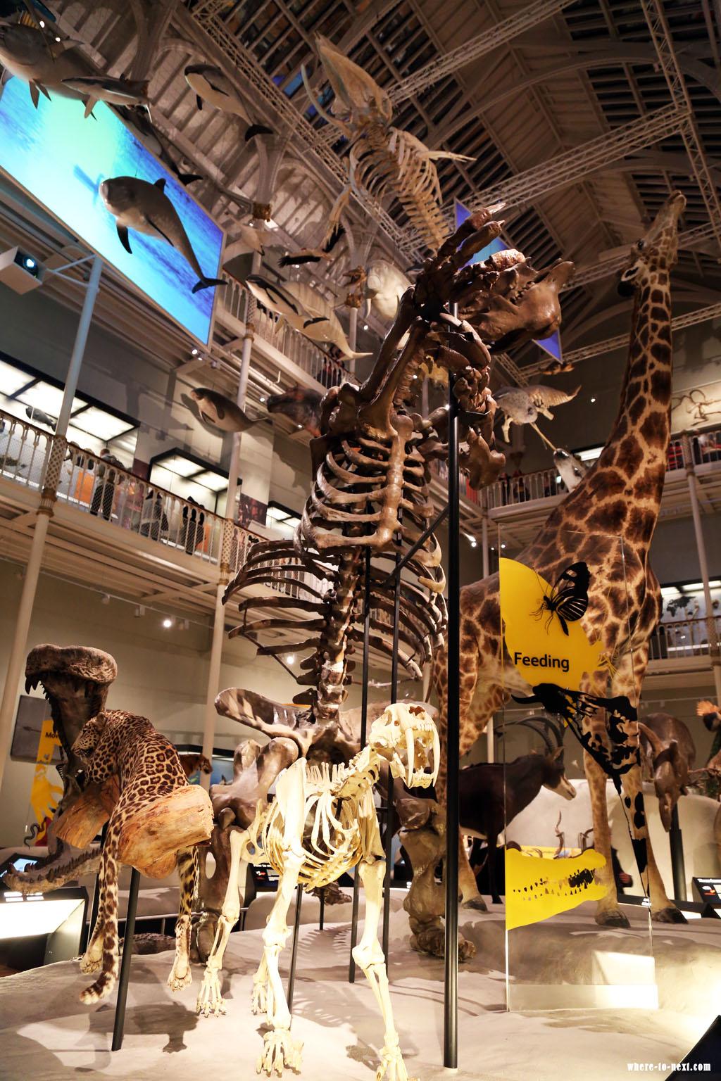 6737 Edinburgh Museum