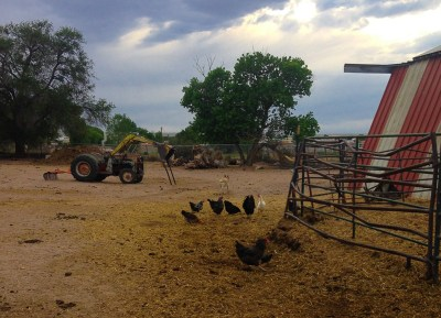 {Late afternoon on our friends' farm. Hanging with the chickens.}