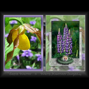 #2048 Yellow Lady Slipper Notecard