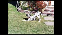 A tribute to my dog, who died today, February 16, 2012