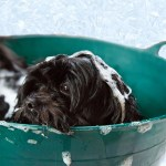 Dog Grooming Tips During Bath Time That You Need to Know