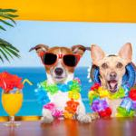 Seven Summer Activities to do With Your Dog