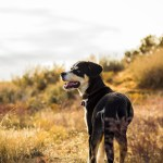 It's Hot! How to Keep Your Dog Safe This Summer