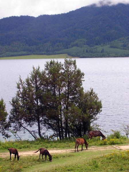 horses-rara