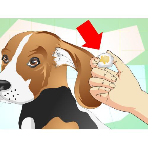 Medium Crop Of Why Does My Dog Shake