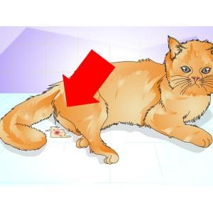 Voguish Ir Nipples Do Male Cats Have Nipples On Ir Stomach How To Tell If A Cat Is Steps Wikihow Do Male Cats Have Milk