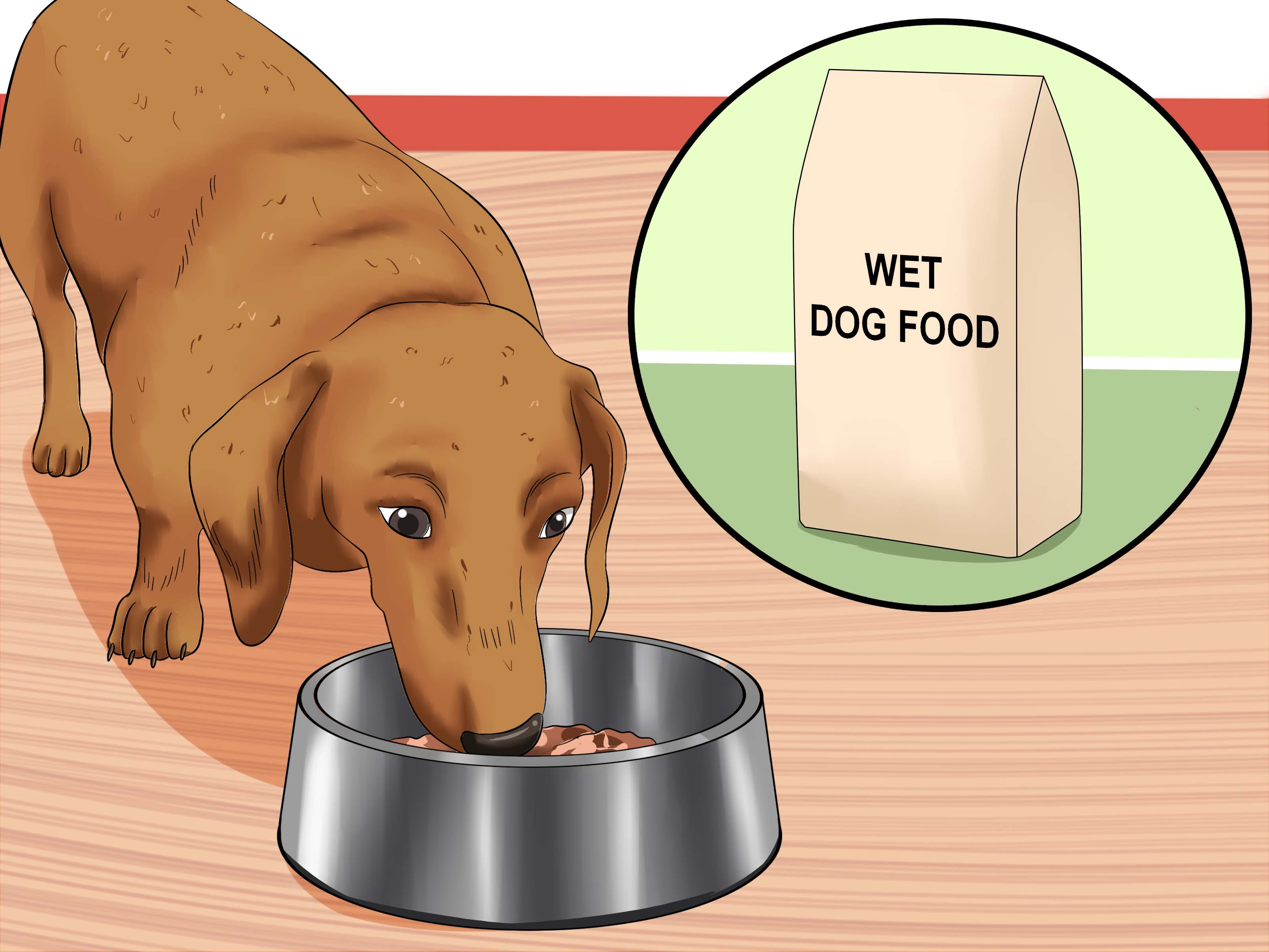 Precious Morning Dog Vomiting Yellow Bile Will Not Eat Cure Frequent Dog Vomiting Step 11 Dog Vomiting Yellow Bile houzz 01 Dog Vomiting Yellow Bile