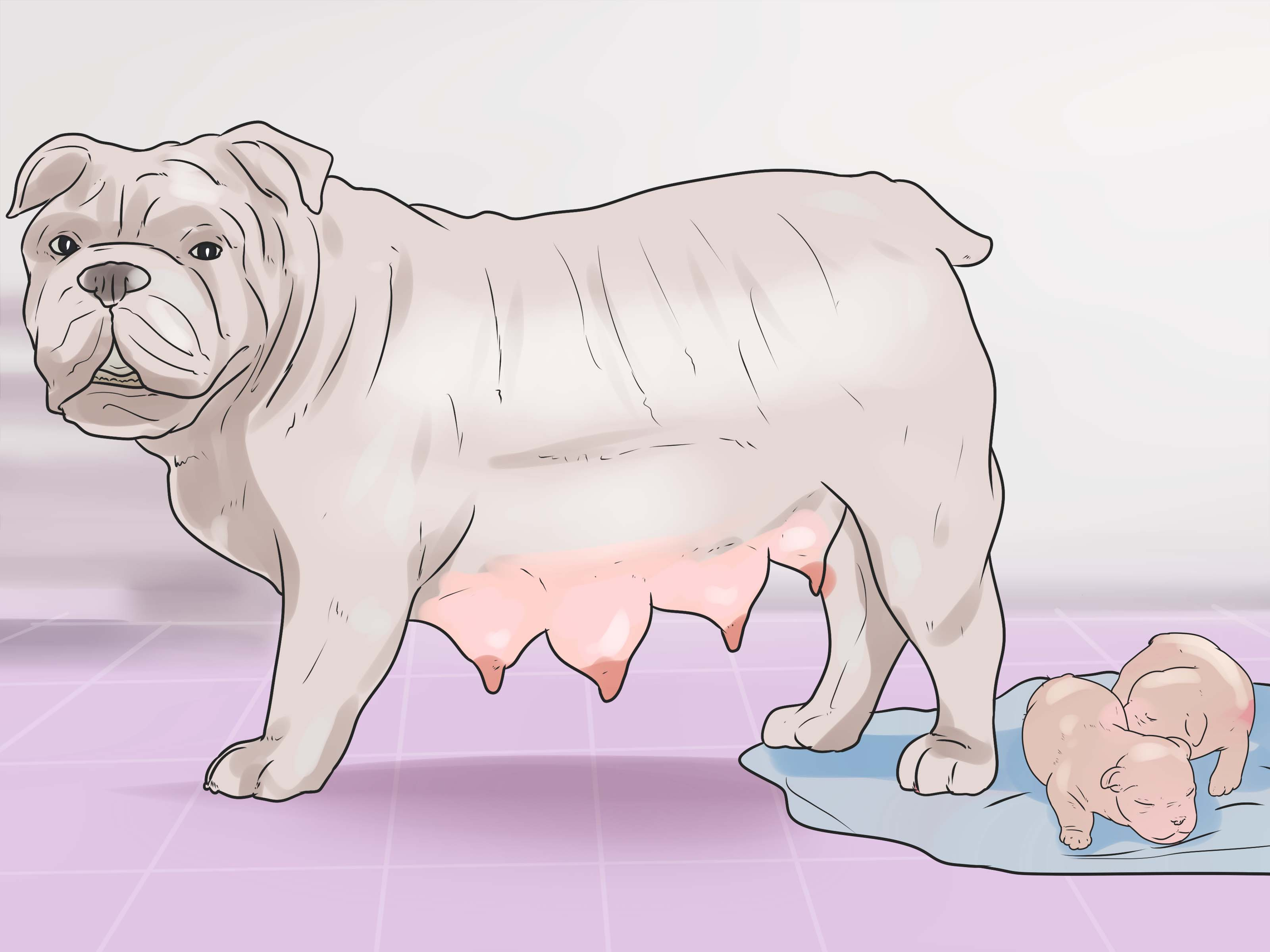 Prodigious Help Your Dog Whelp Or Deliver Puppies Step 17 How To Make Dog Throw Up Peroxide How To Make Dog Throw Up Underwear bark post How To Make Dog Throw Up