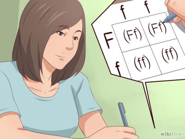 Make a Punnett Square Step 13.jpg