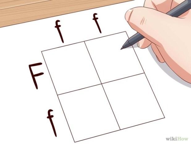 Make a Punnett Square Step 5.jpg