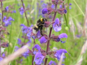 Wildflowers for bees