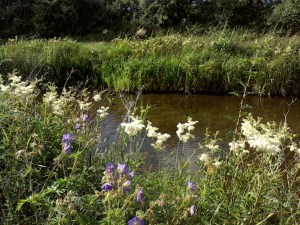 Wildflowers for banks