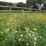 Wildflowers for wet areas