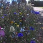 Wildflower landscaping