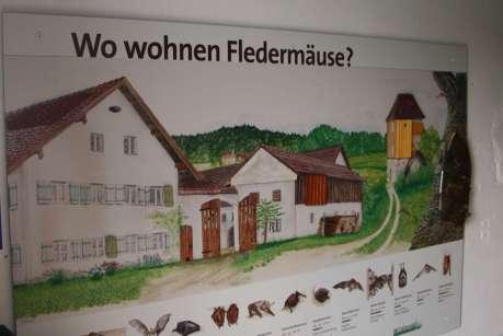 Wohnungen für Fledermäuse © Wildland-Stiftung Bayern