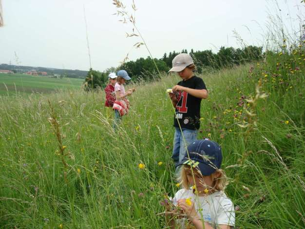 Naturführung zum Lebensraum Wiese
