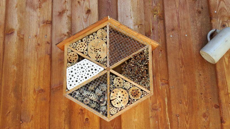Jeder kann etwas für Wildbienen tun!