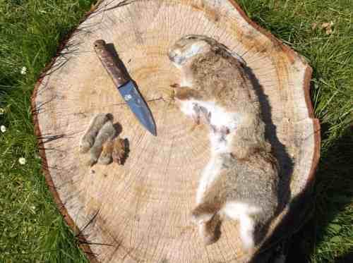 Medium Of How To Butcher A Rabbit