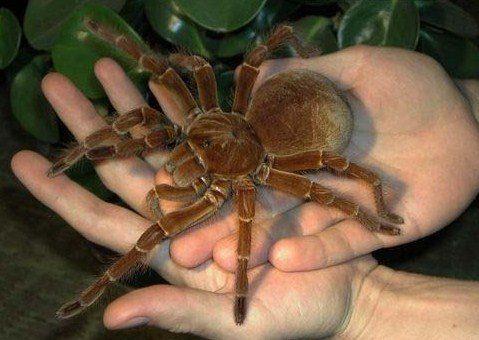 Spinne auf der Hand 1