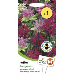 Small Of Bee Balm Seeds