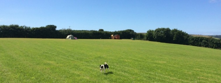 Dog enjoying himself at Wilton Farm campsite