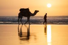 Sportif_Essaouria_camel
