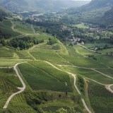Vineyards in the Jura. July 2016.