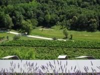 Wine Pleasures visits the Kozlovic winery, Istria, Croatia