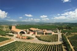 50 Great Cava Wine Tasting Tour 3