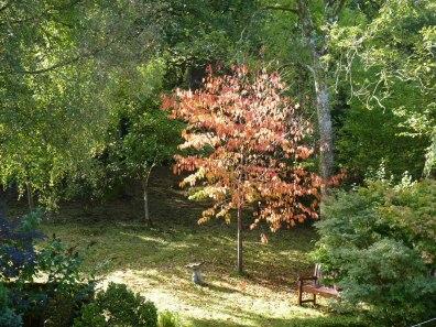 Woodland Garden at Winsbere
