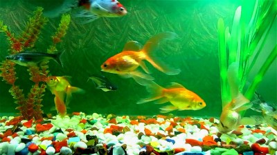 Spring Cleaning Tips for Your Fish Aquarium | WishForPets