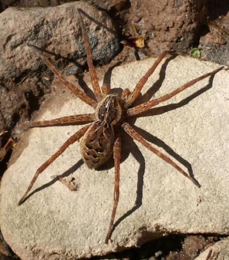 Nature Study: Spider Photograph