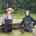 Water Chestnut Removal at Jamestown Audubon